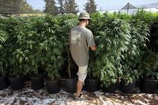заказать семена марихуаны онлайн