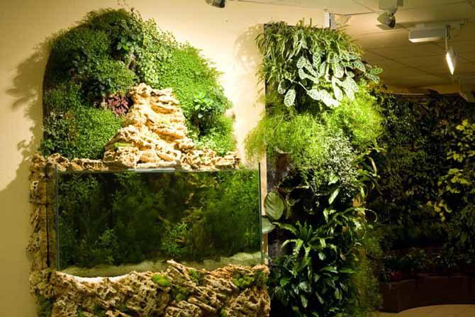 Вертикальное озеленение Киев