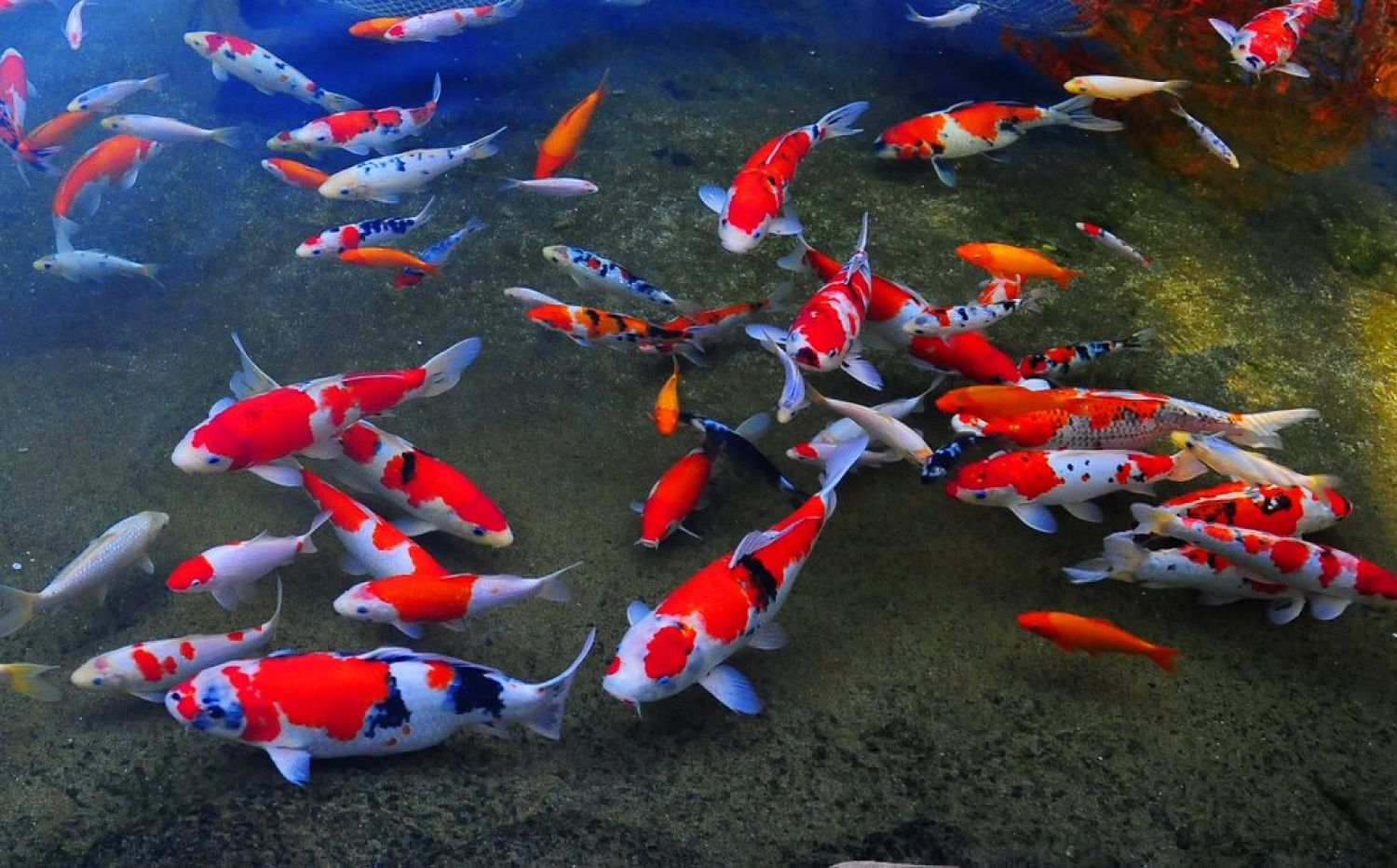 корм tetra pond koi colour growth sticks